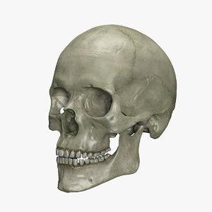 3d model human skull interior