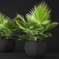 palm tree 3d x