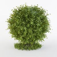 Round bush