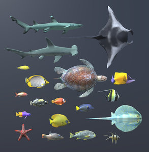 animals coral reef fish 3d x
