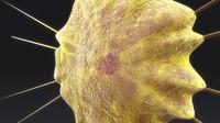 3d obj acantharea radiolarian protozoa