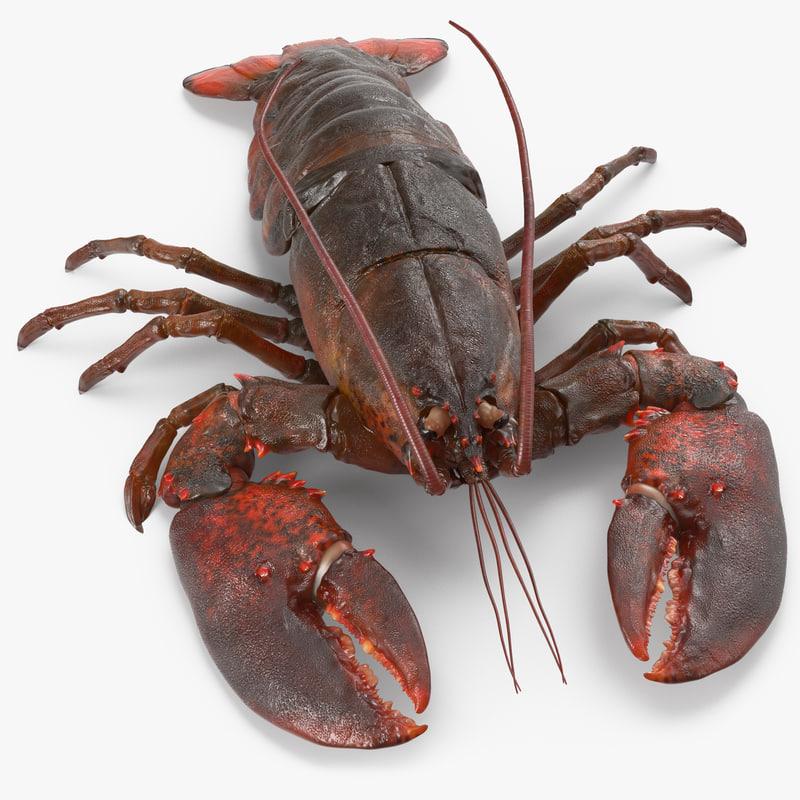 max lobster pose 2