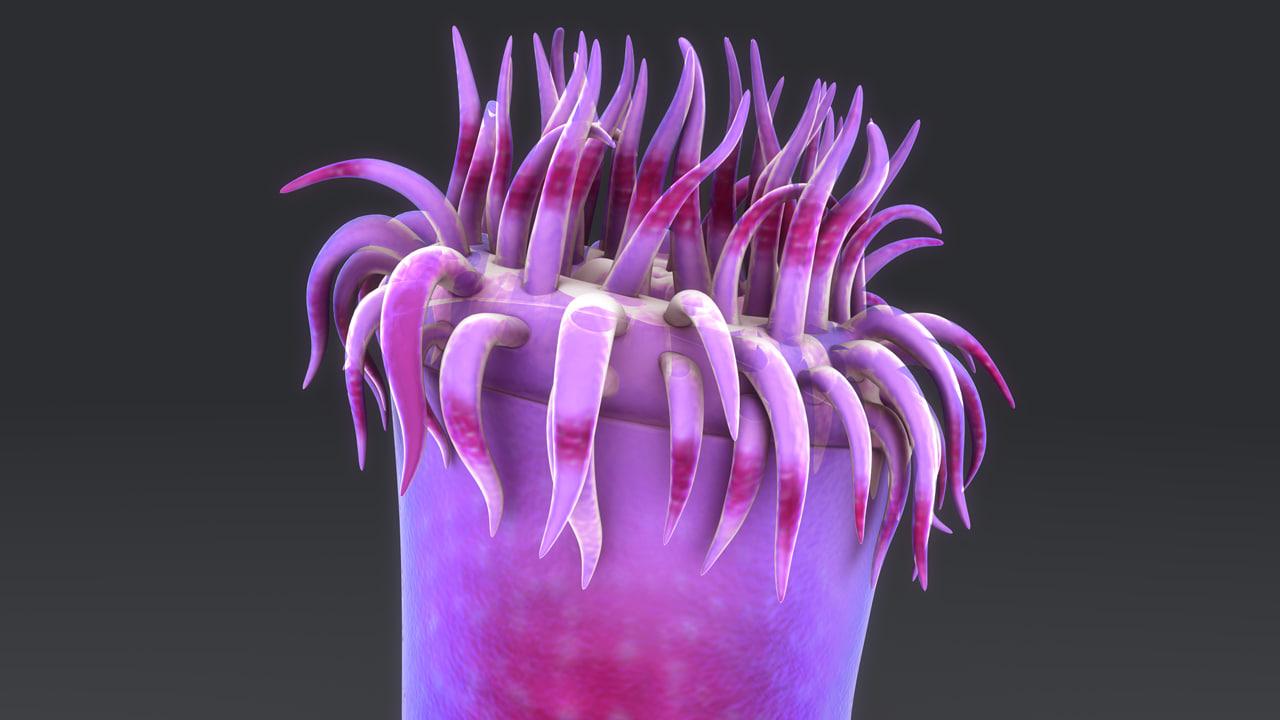 3d sea anemone