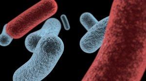 free c4d model bacteria
