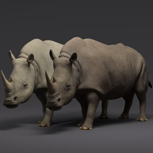 3d rhinoceros animations model