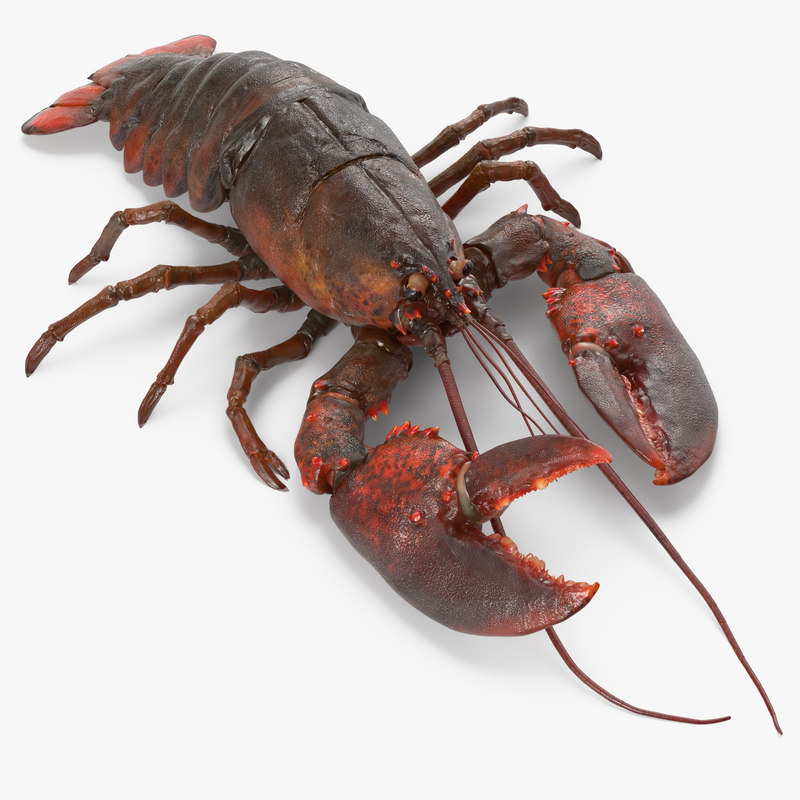 3d model lobster pose 3