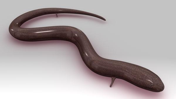 congo eel 3d model