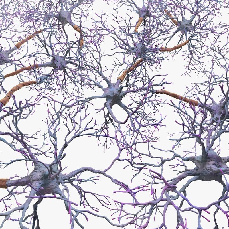3d neural network