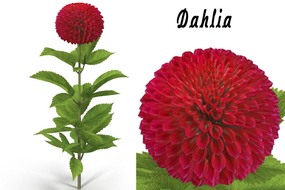 3d max dahlia flower