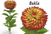 dahlia flower 3d model