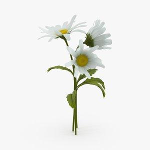daisy natural group max