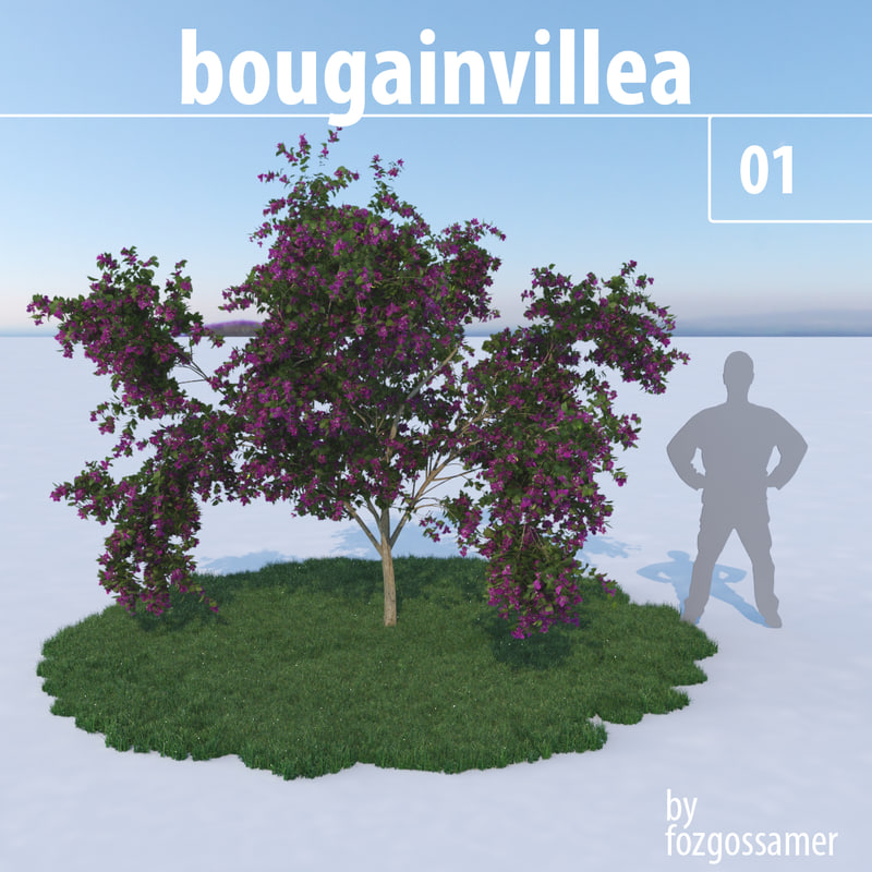 bougainvillea bougain villea 3d model