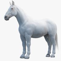 3d white horse model