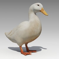 Duck Animated