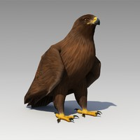 3d model golden eagle animations