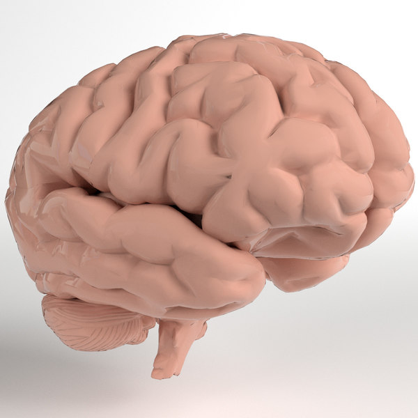 pbr uv-unwrapped human brain 3ds