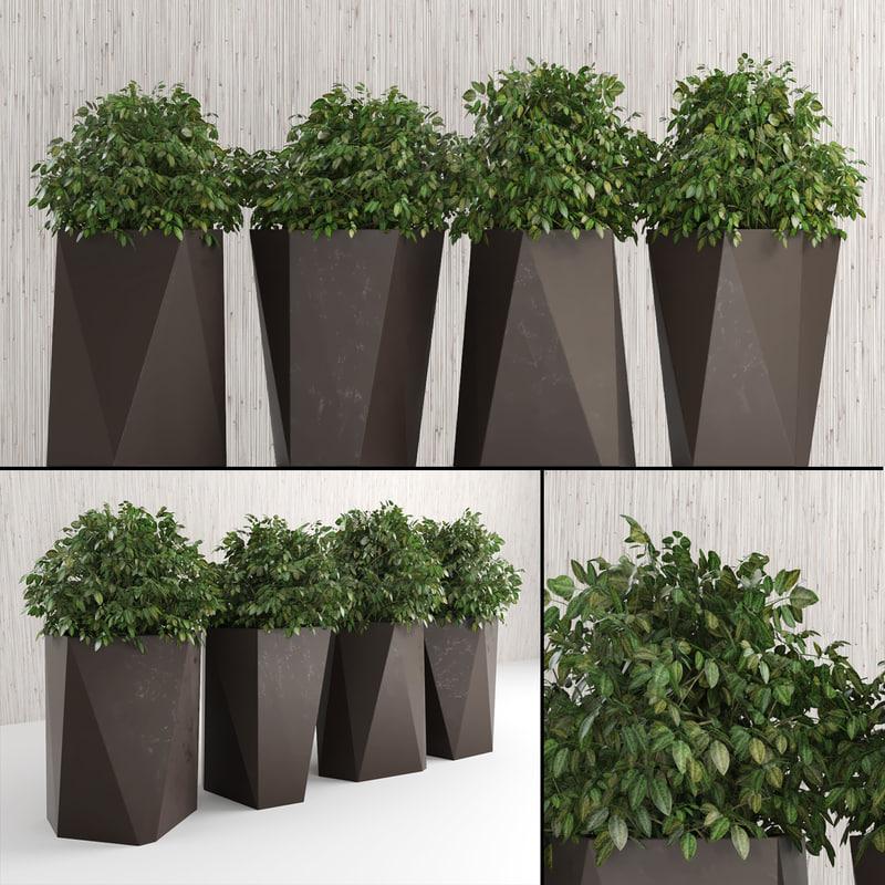 plants indoor outdoor 3d obj