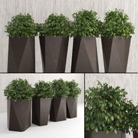 plants indoor outdoor 3d obj