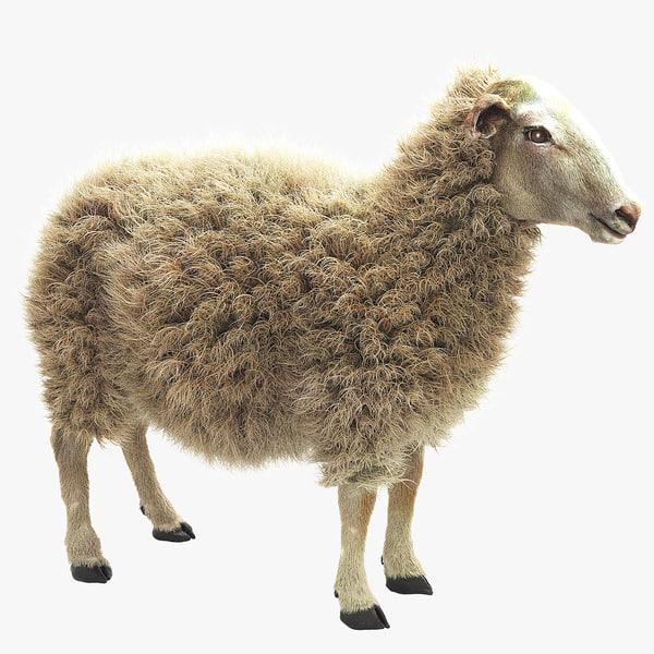 sheep realistic fur 3d max