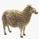 Suffolk Sheep 3D models