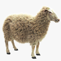 sheep realistic fur 3d max