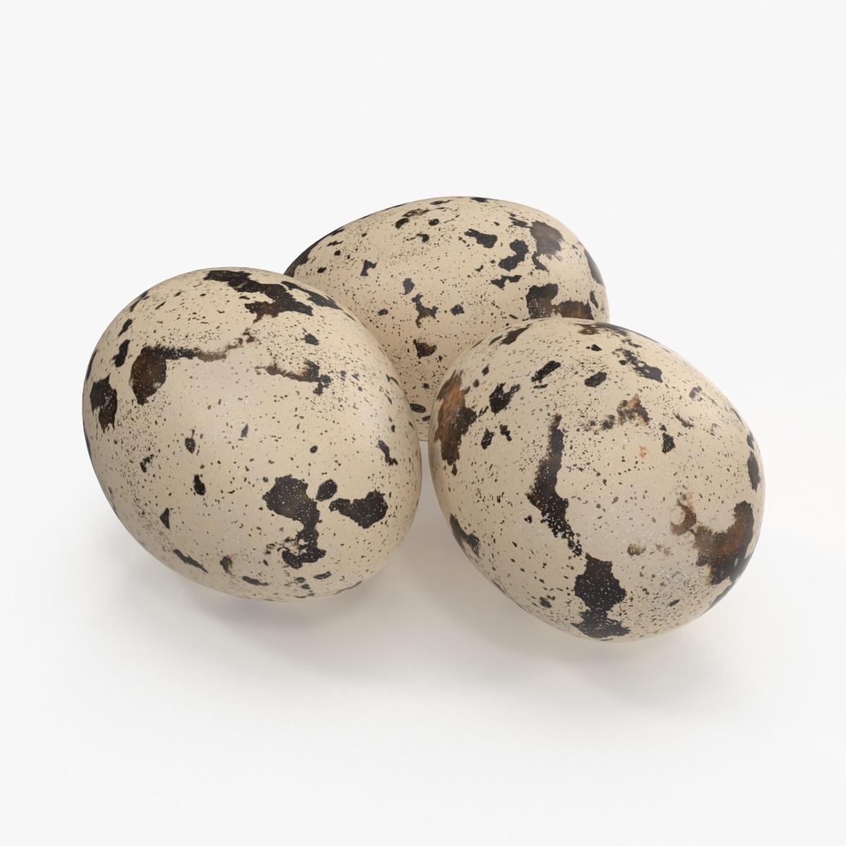 quail eggs max