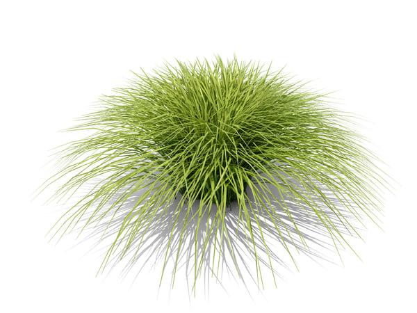obj plant variegated japanese sedge