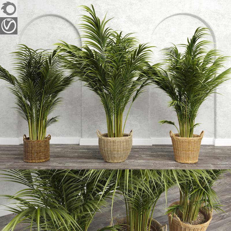 3d model areca palm trees plant