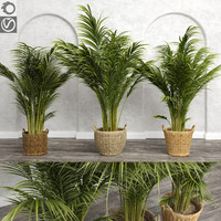 3d model areca palm trees plant