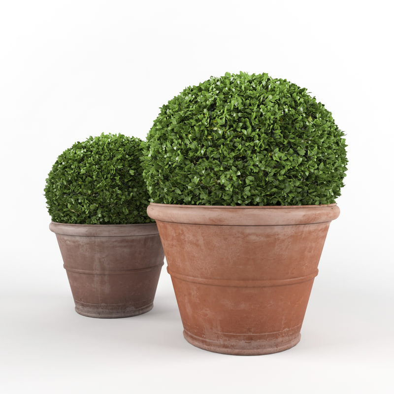 3d boxwood - set 4 model