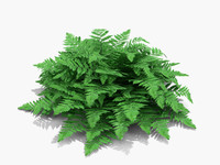 3d model plant crested lady fern