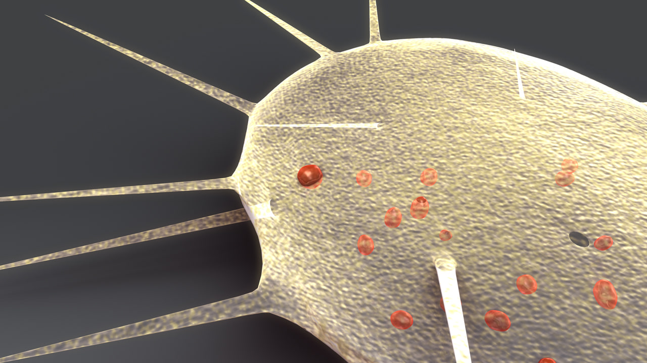 heliozoa heliozoans 3d model