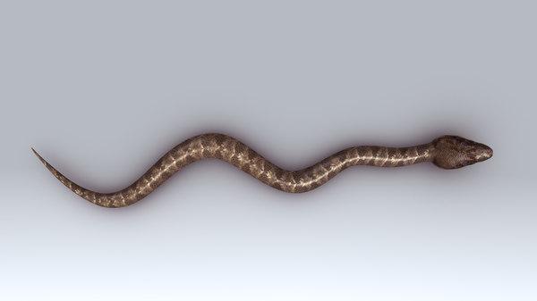obj himalayan pit viper