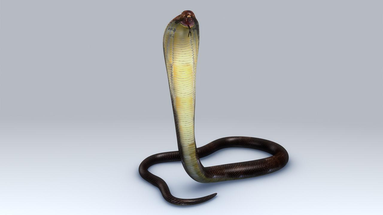 3d king cobra snake model