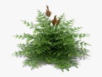 3d model plant purple royal fern