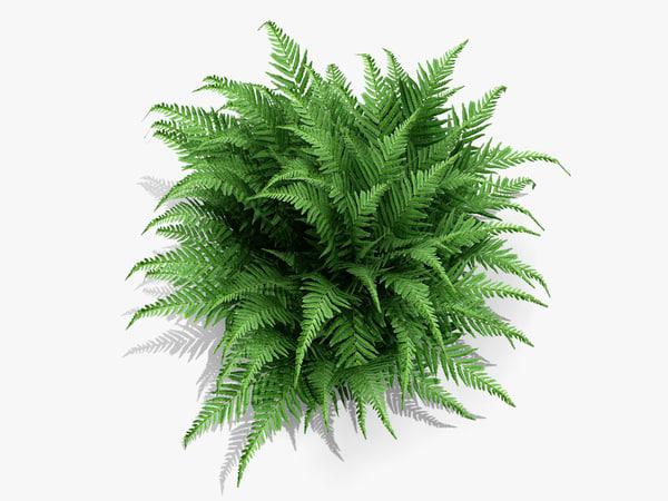 plant robust male fern obj