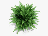 plant robust male fern obj