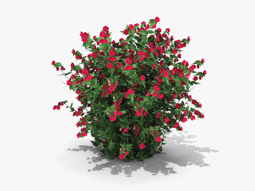 3d model plant flowering maple