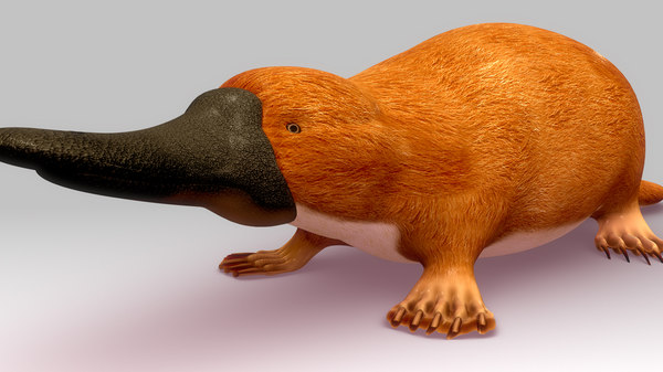 3d platypus ornithorhynchus animal
