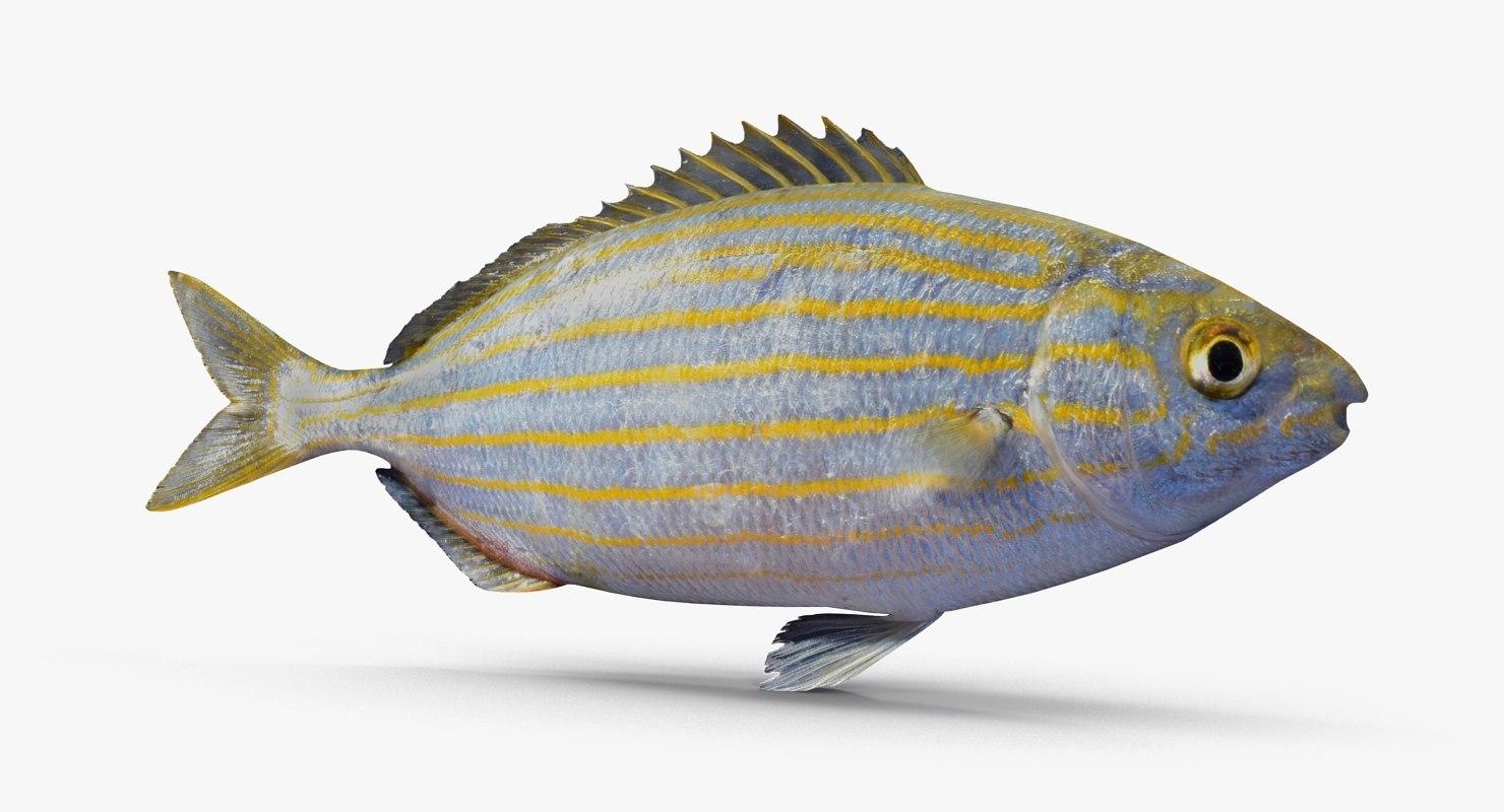 saupe fish sarpa 3d model
