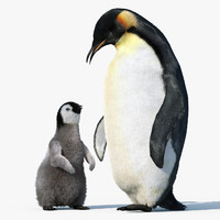 emperor penguin group fur 3d max