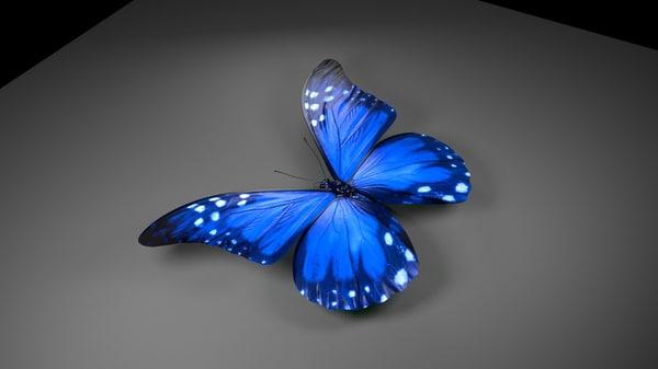 butterfly hd 3d model