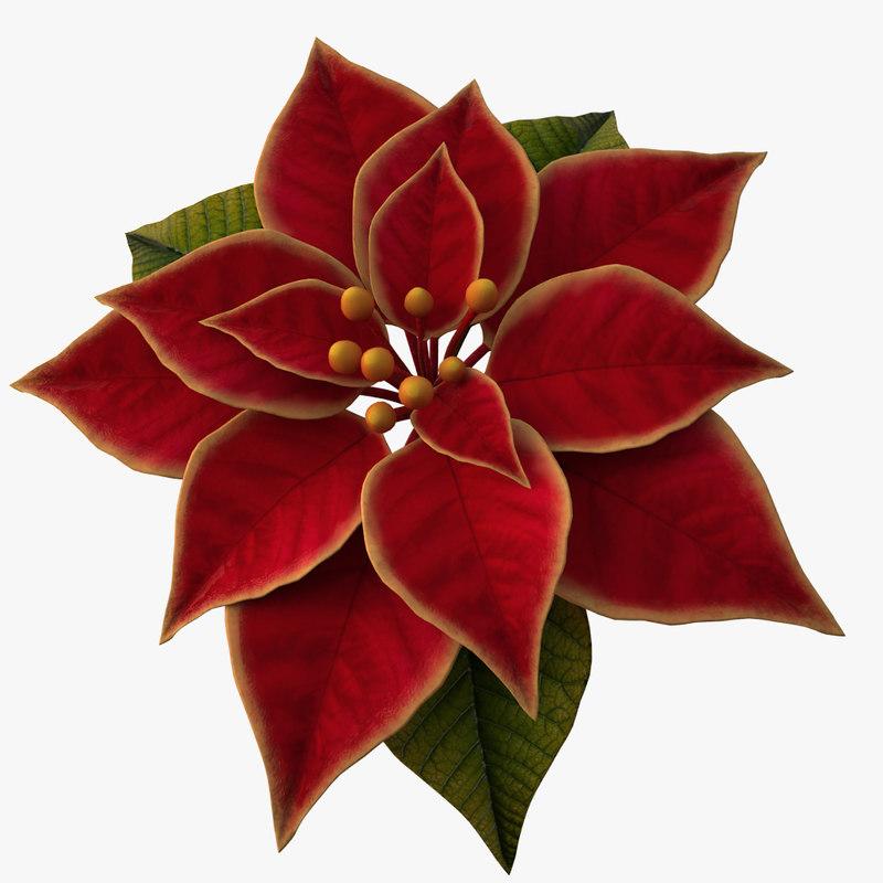 3d model of christmas flower