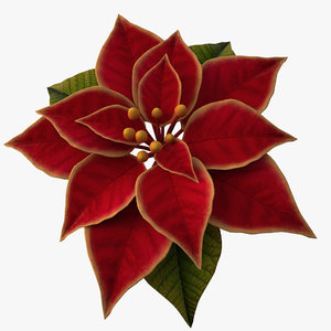 3d model of christmas flower