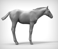 3ds horse foal