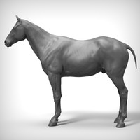 Horse Realistic