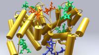 phycocyanin 3d model