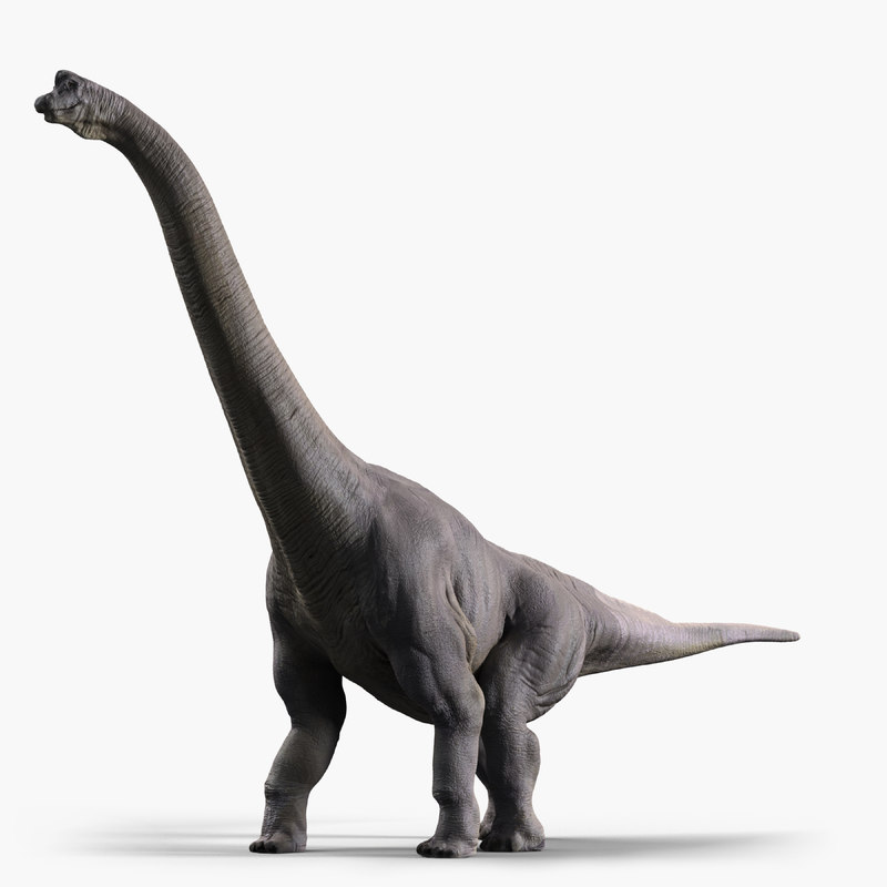 3d model of brachiosaurus dinosaur animate