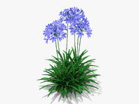 plant agapanthus monmid flowers 3d obj