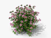 3d plant azalea moness model